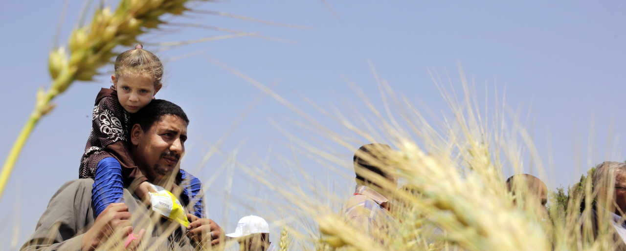 An Egyptian farmer carries his daughter in front of wheat crops on his land in Kafr Hamouda village, in Zagazig, 63 miles (100 kilometers) northeast of Cairo, Egypt.