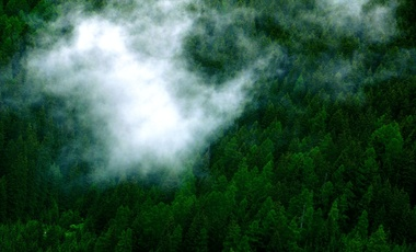 Clouds over forest