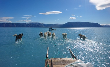 Sled dogs on melting Greenland ice sheet.