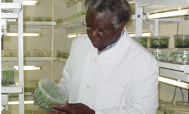 Calestous Juma observes tissue culture propogation of bananas at a genetics technology lab in Nairobi, Kenya.