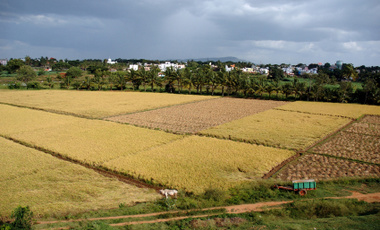 Vegetable Oil Based Biofuels in India