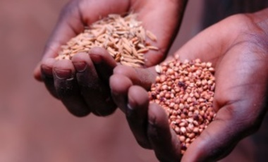Local Start-ups Hold the Key to Transforming Africa's Seed Industry