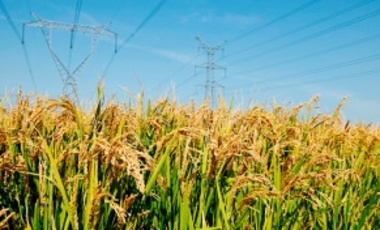 Rice in the field and pylons. By keeping workers and economic activity in rural areas, China has helped expand rural markets and limit rural-urban migration.