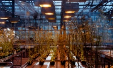 Greenhouse with genetically modified plants