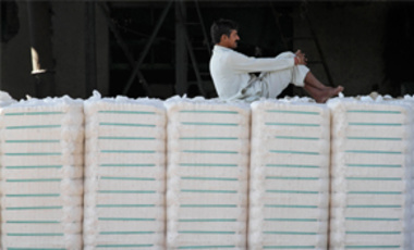 Dec. 16, 2011: an Indian laborer sits on bales of cotton at a cotton mill in Dhrangadhra, India. The Indian parliament was informed earlier that week that about 90 percent of India's cotton crop is Bt. The transgenic seeds have increased the yield.