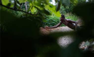 May 31, 2011: Issiaka Ouedraogo lays cocoa beans out to dry on reed mats, on a farm outside the village of Fangolo, Ivory Coast. Climate change will leave many cocoa-producing areas in West Africa unsuitable for chocolate production by 2050.