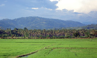 The plains and mountains of Maguindanao, central Mindanao.