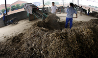 Workers shovel waste from a wheat farm into a prototype for a biomass machine
