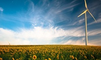 Wind turbine in flower field